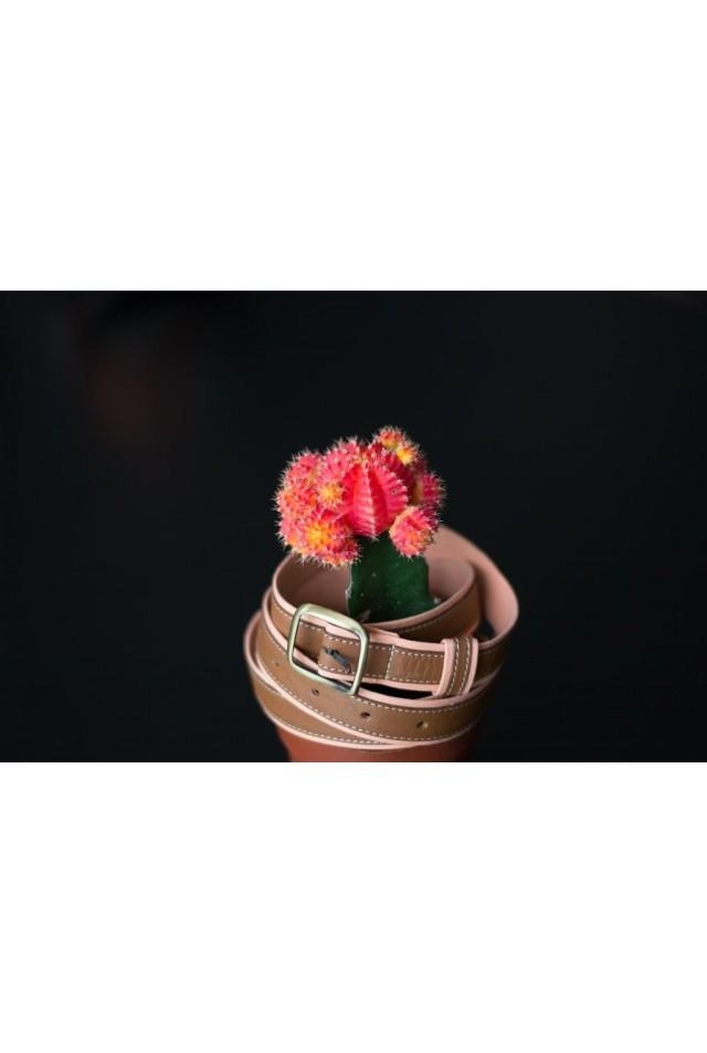 La pimentée rose poudré